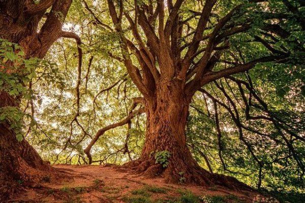 Dřevo jako obnovitelná surovina